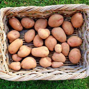 5kg-Potatoesadj